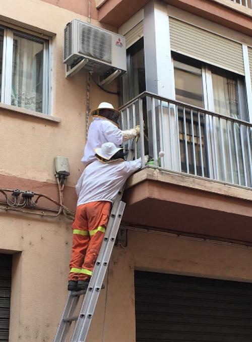 Actuaciones para retirar enjambres de abejas