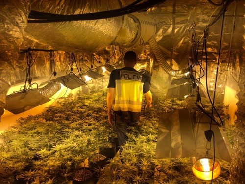 Tres hombres detenidos en Gandia por cultivar marihuana en un domicilio de Alfahuir