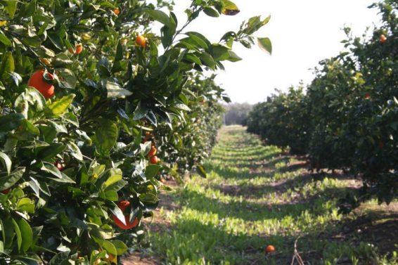 campo naranja