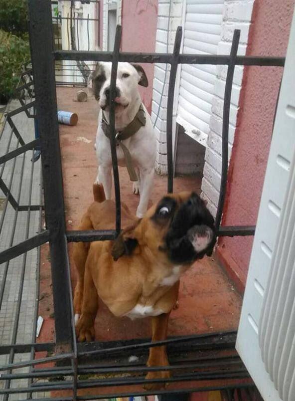 Condenada una mujer en Gandia por maltrato animal al tener a su perro abandonado en el balcón